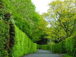 Some lovely trees and hedges