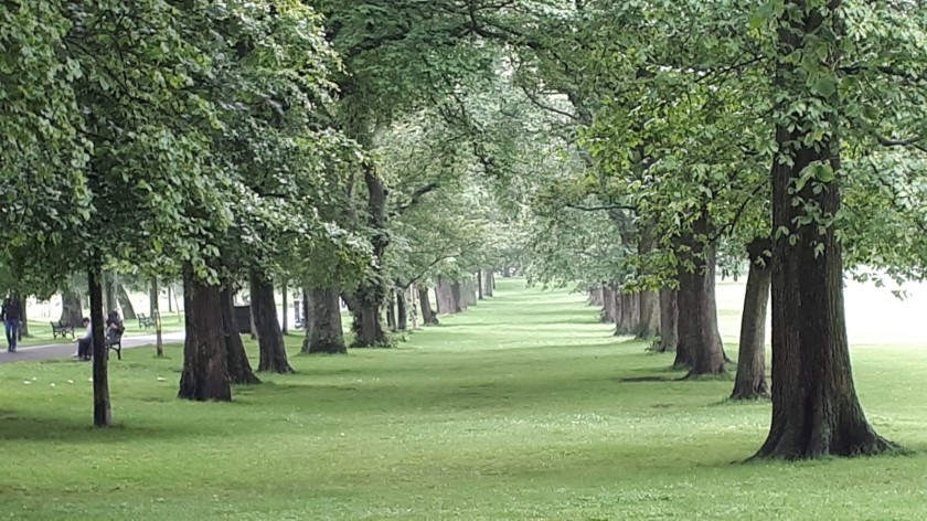 Trees in the Meadows